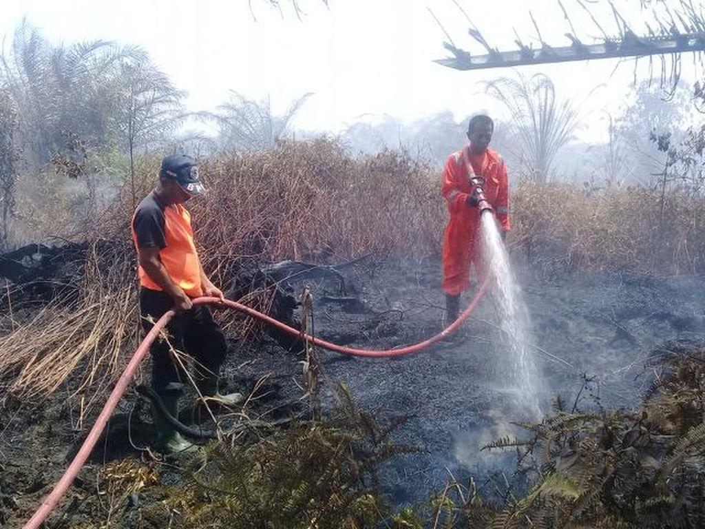 Lahan Gambut di Sumbar Terbakar, BPBD Berjibaku Lakukan Pemadaman