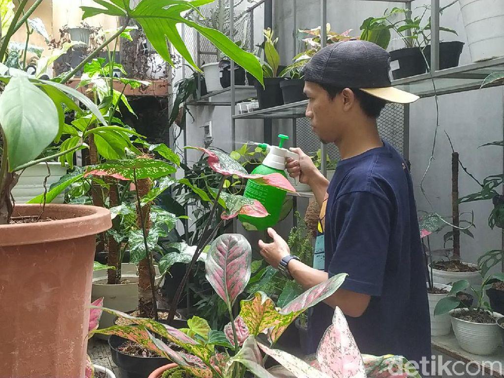Melihat Creative Garden, Markasnya Tanaman Hias Harga Sultan di Garut