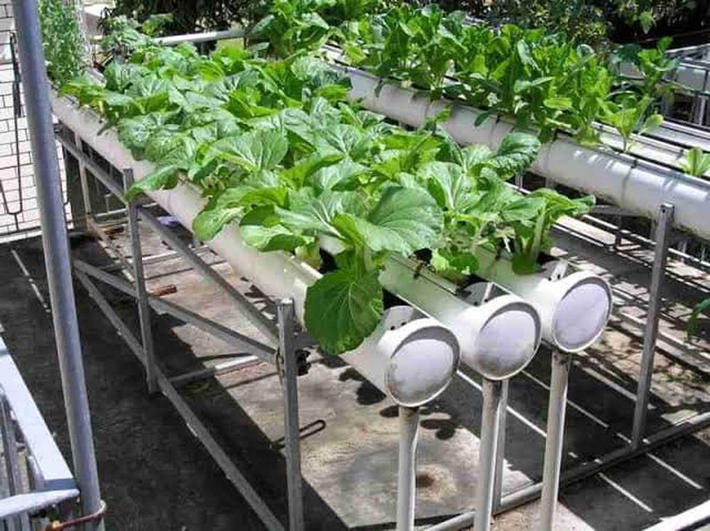 Tren Urban Farming, Penjualan Benih Hortikultura Naik 5 Kali Lipat