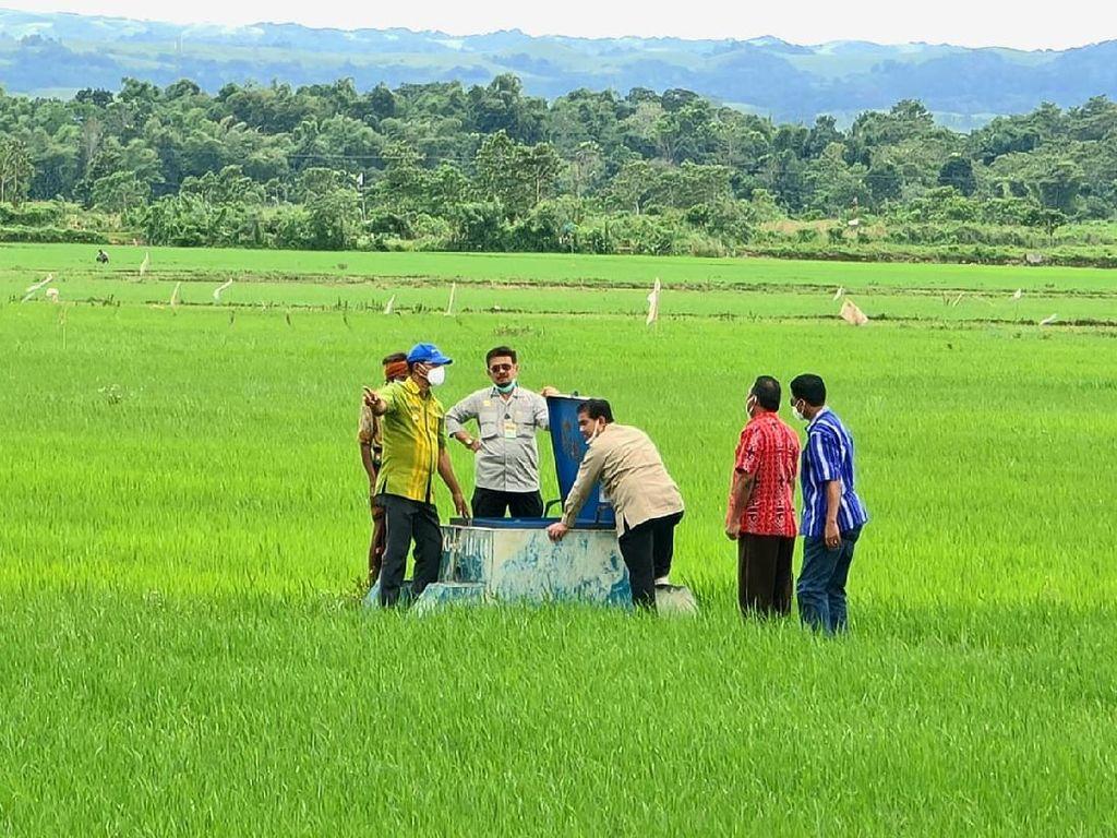 Jokowi Siapkan 10 Ribu Hektare Untuk Food Estate di Sumba Tengah