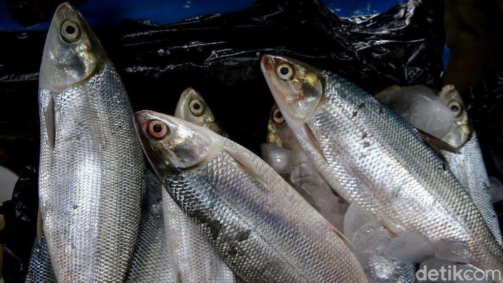 Penjualan Ikan Bandeng Masih Lesu