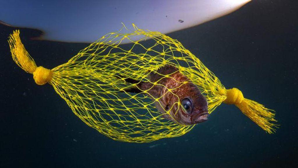 Foto Terbaik di Underwater Photographer of the Year 2021, Ada dari Indonesia