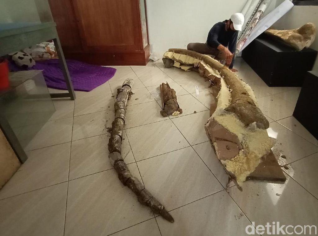 Fosil Gading Gajah Purba 4 Meter Usia 1,5 Juta Tahun Ditemukan di Pati