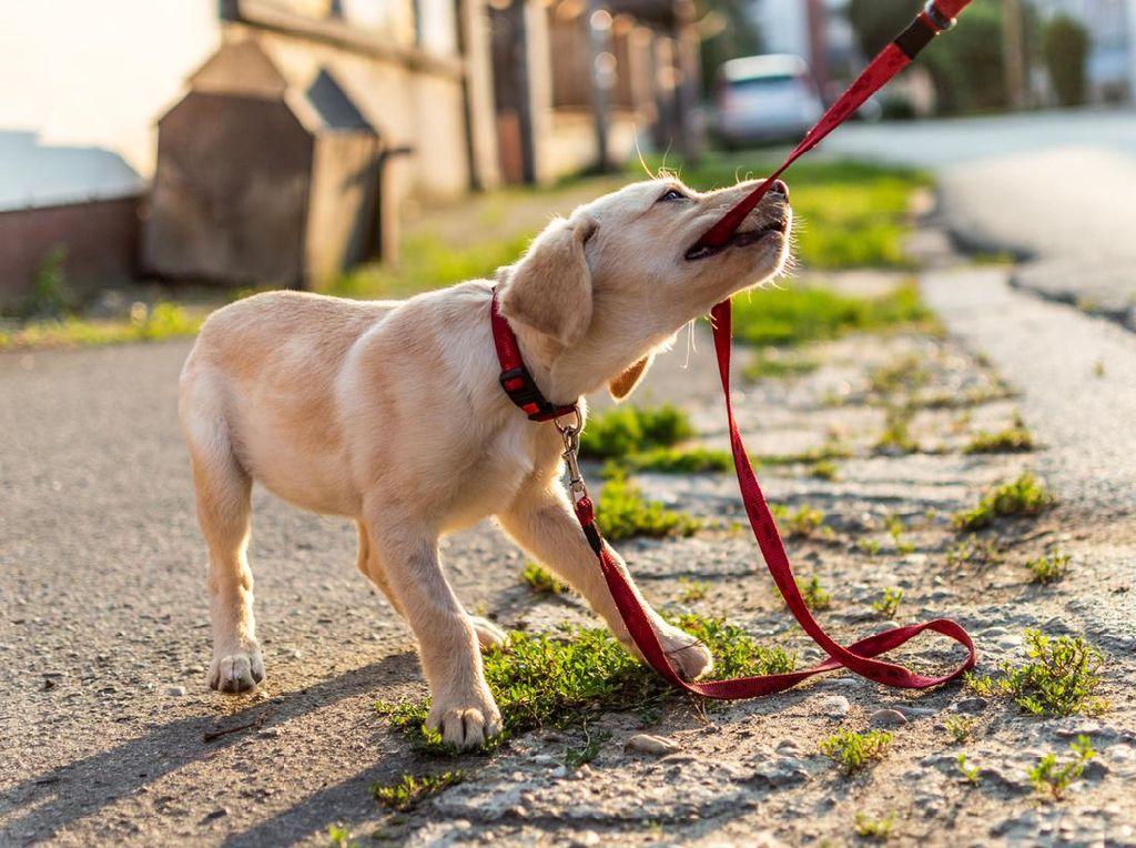Ahli Nilai Maraknya Jual Beli Daging Anjing Dapat Rugikan Konsumen