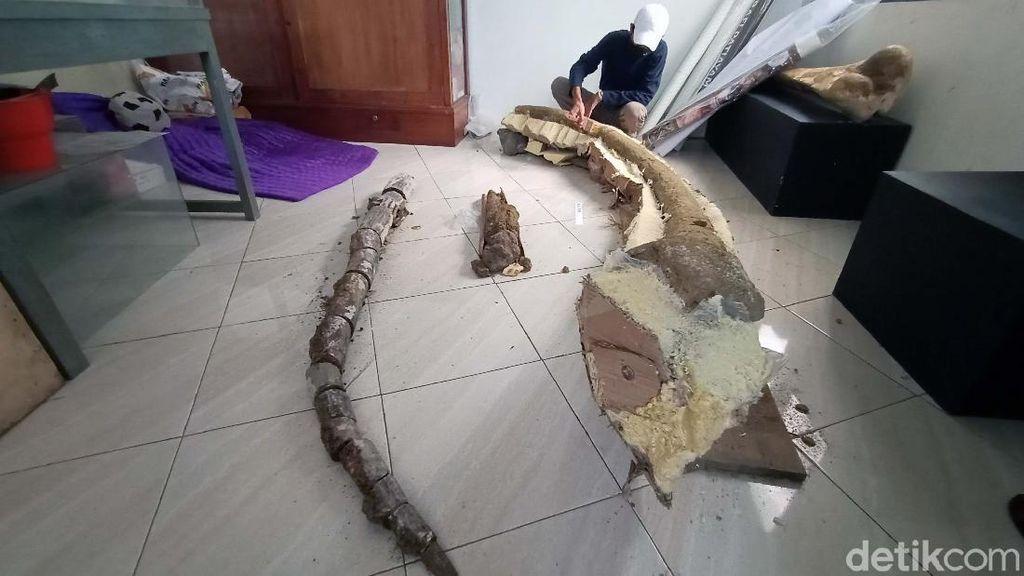 Ini Fosil Gading Gajah Purba yang Disimpan di Museum Purbakala Kudus