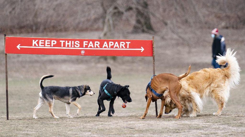 Serunya Bermain di Taman Anjing New York