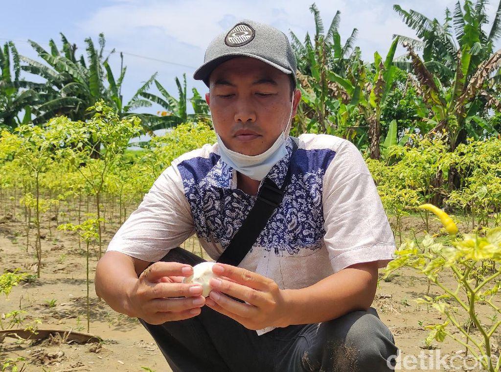 Puluhan Butir Diduga Telur Buaya Dekat Bengawan Solo Raib, Hanya Tersisa Satu