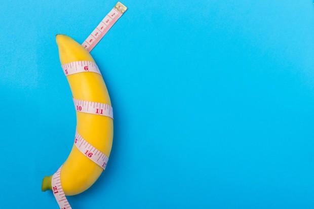 Berlawanan dengan kepercayaan umum, yang mana penis kerap disebutlove muscle, penis sebenarnya terdiri dari otot apa pun.