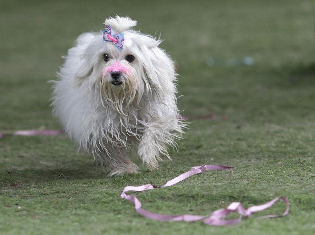 Fakta Menarik Anjing, Sahabat Manusia nan Setia