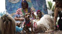 Gemas! Saat Para Anjing Adu Gaya di Karnaval Brasil