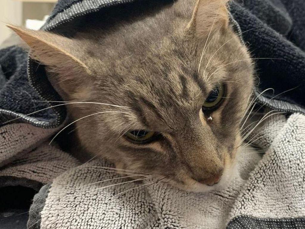 Sedih, Kucing Ini Mati Demi Lindungi Anak dari Gigitan Ular Berbisa