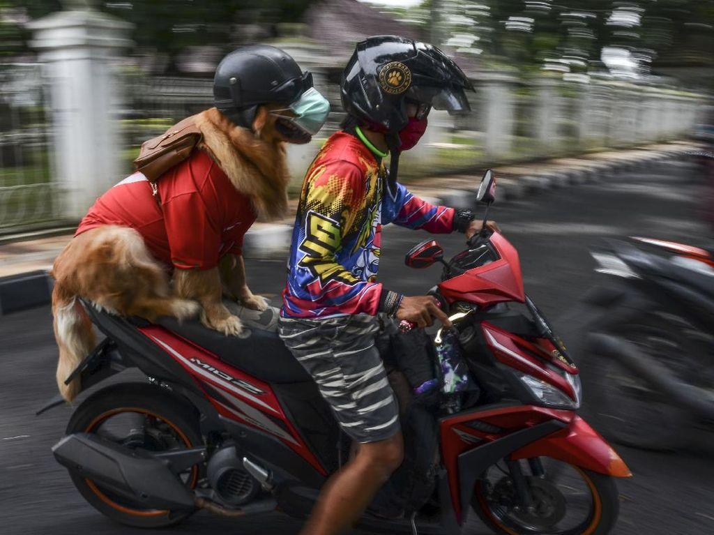 Jangan Mau Kalah, Anjing Pintar ini Taat Protokol Kesehatan Lho
