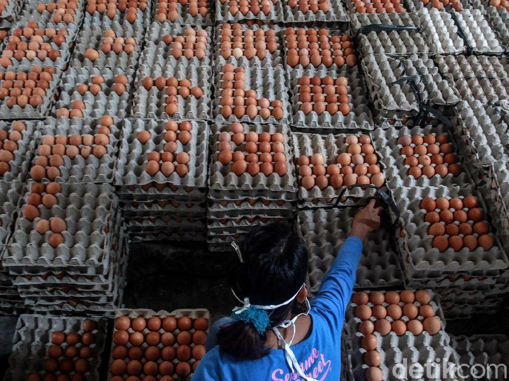 Asal Muasal Blitar Dikenal Sebagai Sentra Peternakan Ayam Petelur