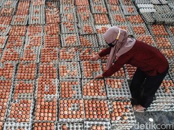 Memutus Rantai Panjang Distribusi Telur