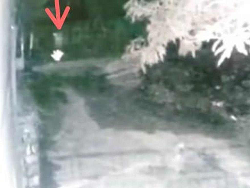 Pocong Dikejar Anjing di Sulsel, Apa Anjing Bisa Lihat Hantu?
