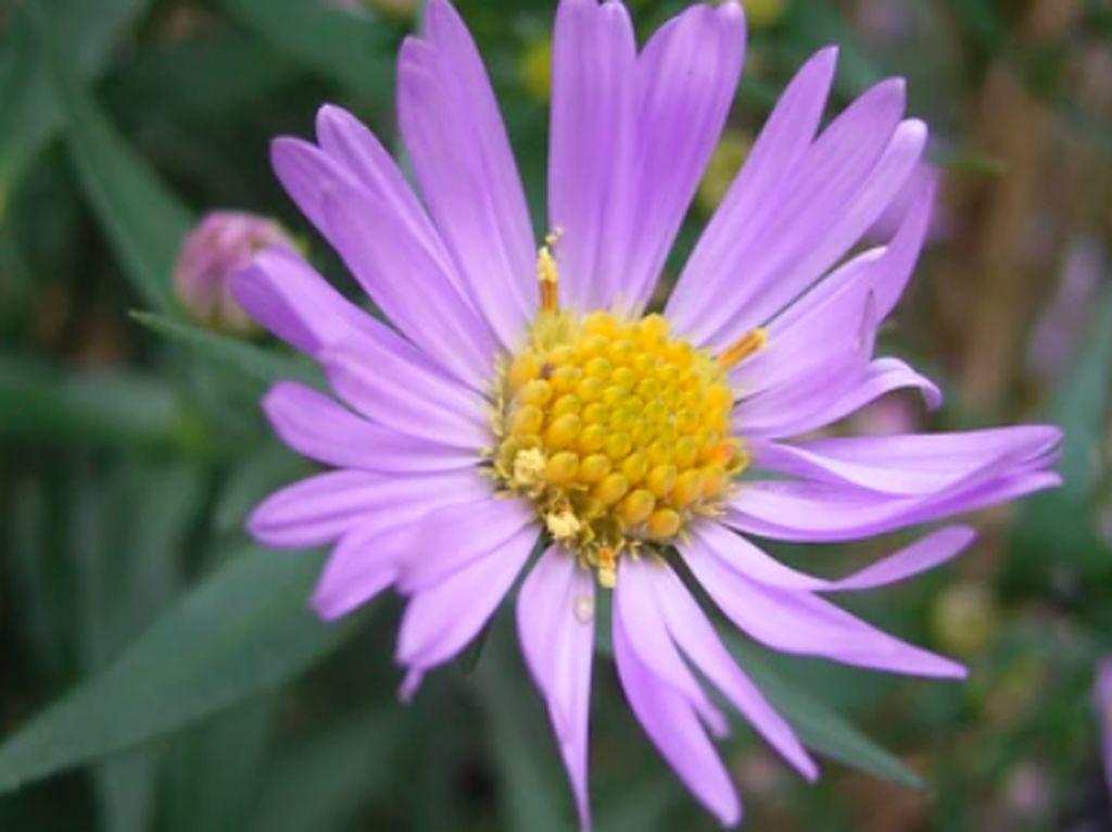 Gambar Bunga di Wikipedia Ini Mendadak Dilihat 90 Juta Kali Sehari