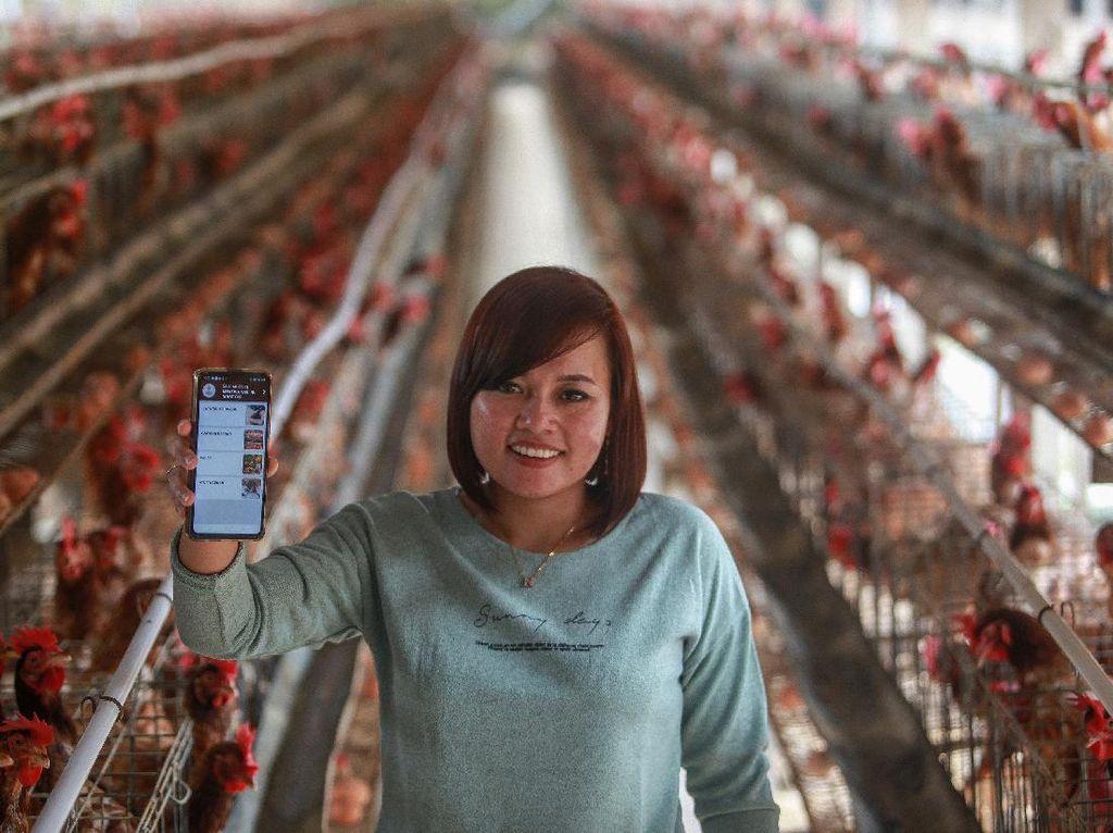 Tinggal Klik, Peternak Ayam Layer di Blitar Jual Telur Pakai Aplikasi