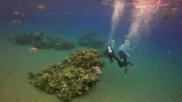 Scuba divers approach a coral reef while on a dive in the Red Sea waters off the coast of Israel's southern port city of Eilat on February 9, 2021. - Israeli environmentalists are warning that the UAE-Israeli deal to bring Emirati crude oil by tanker to a pipeline in Eilat threatens unique Red Sea coral reefs and could lead to
