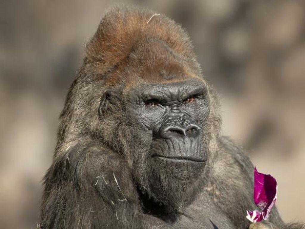 Lindungi Hewan dari Corona, Puluhan Kebun Binatang AS Pesan Vaksin