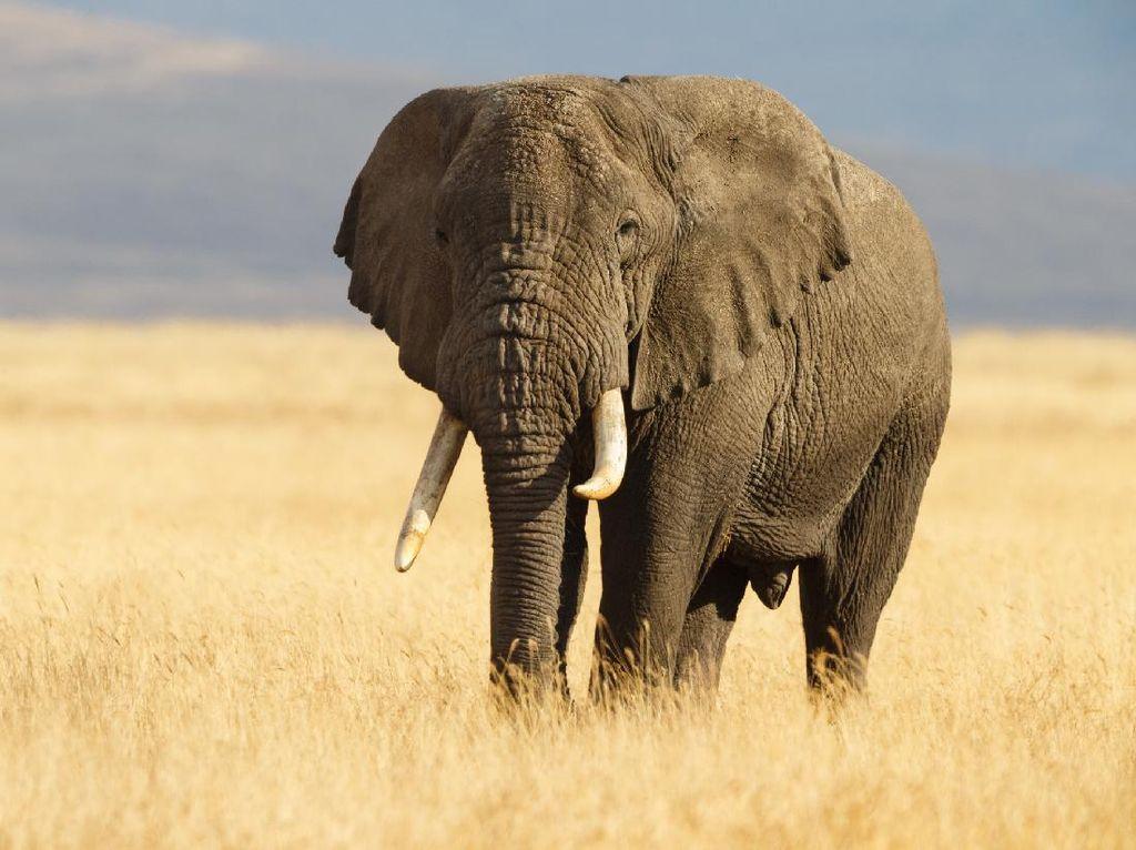 Ya Ampun! Ayah Bawa Anaknya Masuk Kandang Gajah Demi Konten