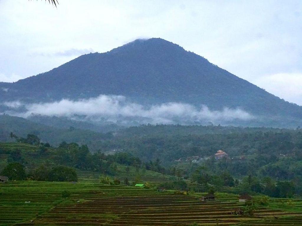 Wija Soju Bali, Sensasi Negeri Ginseng dengan Bahan Lokal Premium