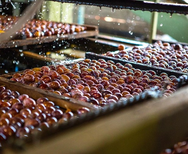 Minyak buah plum itu menghidrasi dan anti-inflamasi