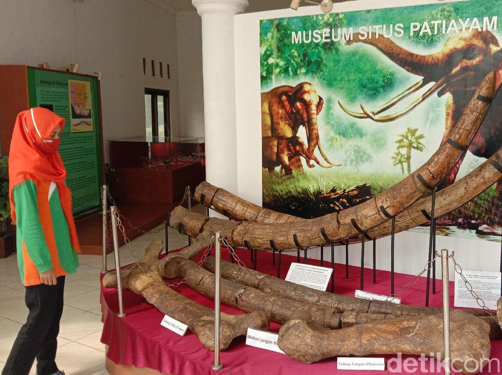 Foto: Situs di Kudus Simpan Aneka Fosil Hewan Purba
