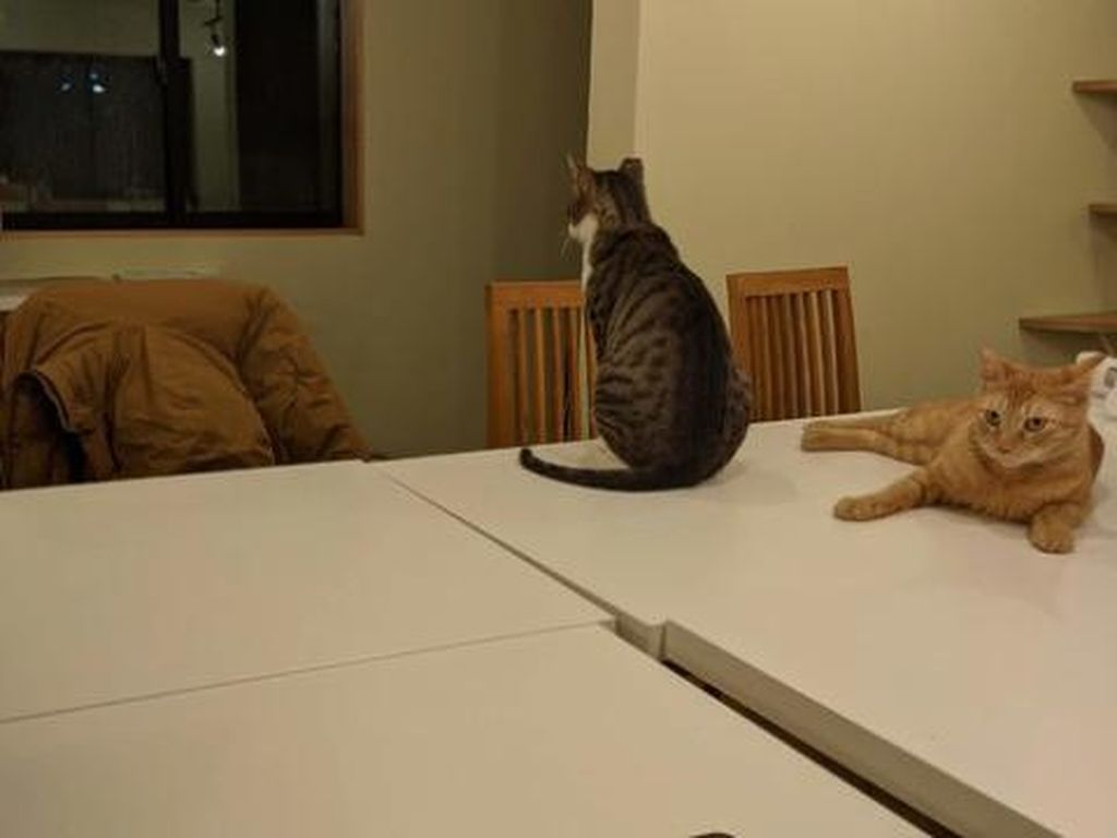 Biar Nggak Kesepian, Jepang Buat Tempat Kerja Ditemani Kucing