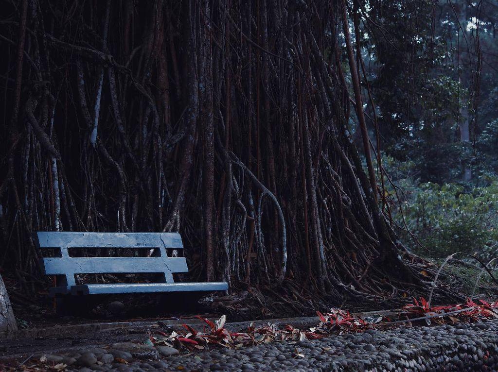 4 Wisata Murah di Bogor, Seharian Tidak Sampai Rp 200 Ribu!
