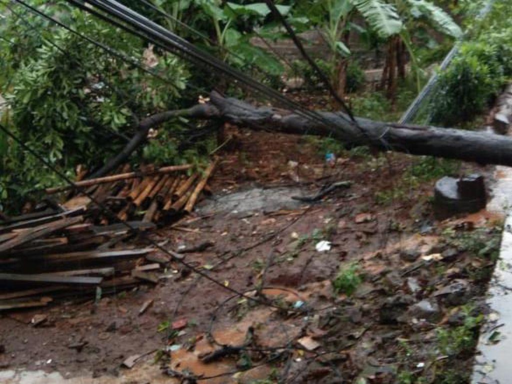 Pohon Tumbang di 2 Titik Bekasi, Timpa Kabel Listrik-Tutup Jalan