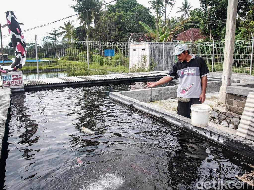 KKP Siapkan Peta Pengembangan Kampung Ikan untuk Ketahanan Pangan