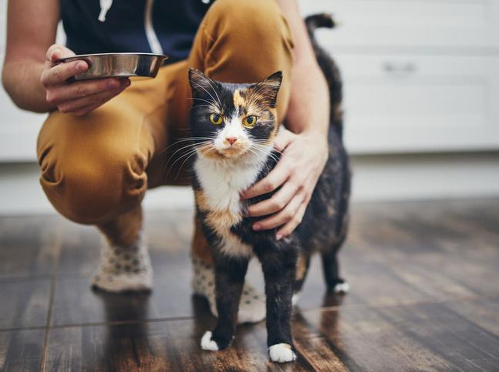 Viral Penjagalan Kucing untuk Dimakan, Ini Bahaya Konsumsi Daging Kucing