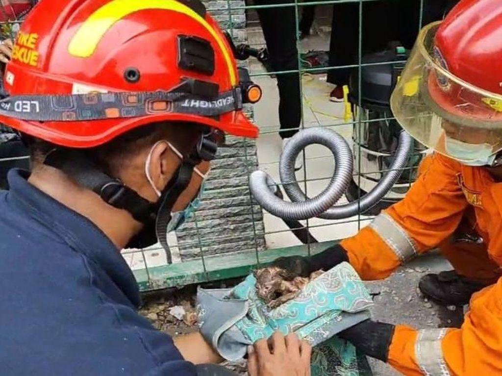 Cerita Petugas Damkar Evakuasi Anak Kucing Terjebak di Saluran Air 3 Hari