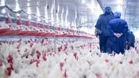 Rusia-China Catat Kasus Flu Burung pada Manusia, Potensi Pandemi Berikutnya?