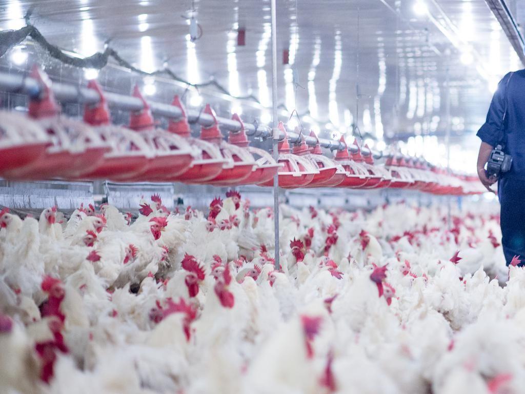 Rusia Laporkan Kasus Flu Burung Pertama pada Manusia