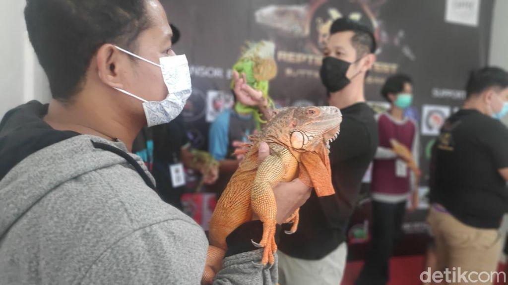 Foto: Serunya Kontes Reptil Pertama di Maros