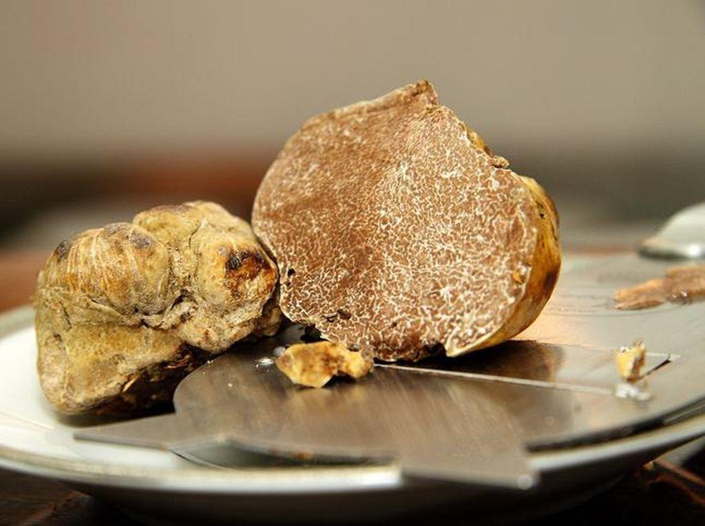 Prancis Berhasil Budidayakan Jamur White Truffle yang Berharga Fantastis