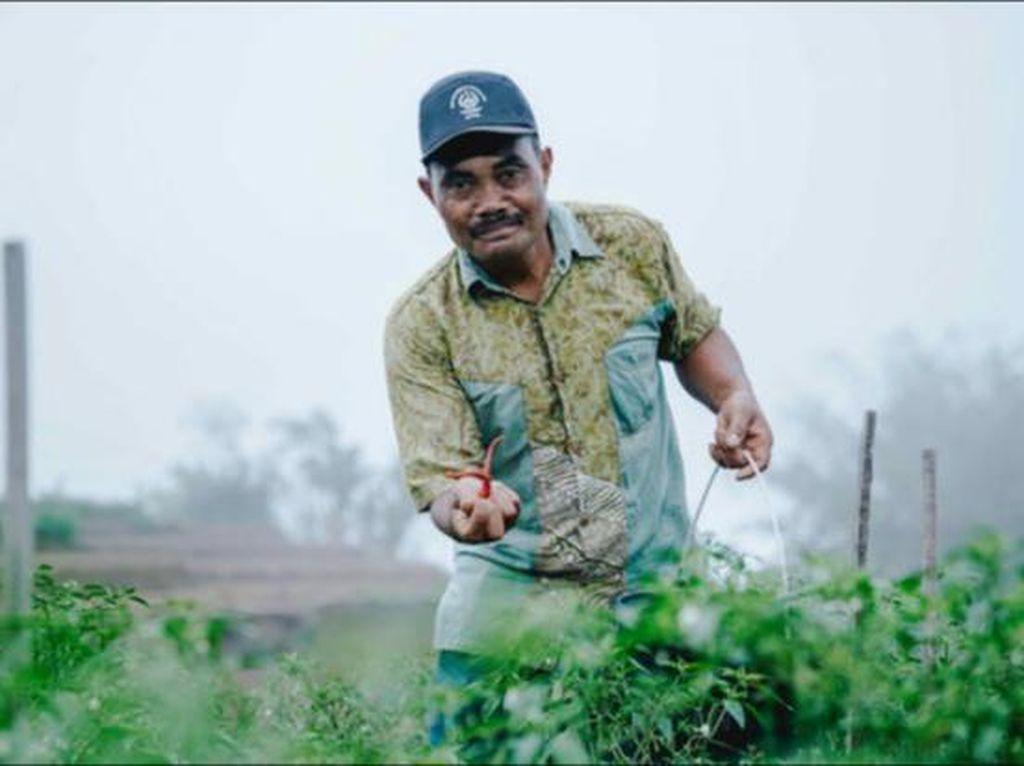 Pembatasan Pupuk Subsidi dan Peluang Pertanian Berkelanjutan