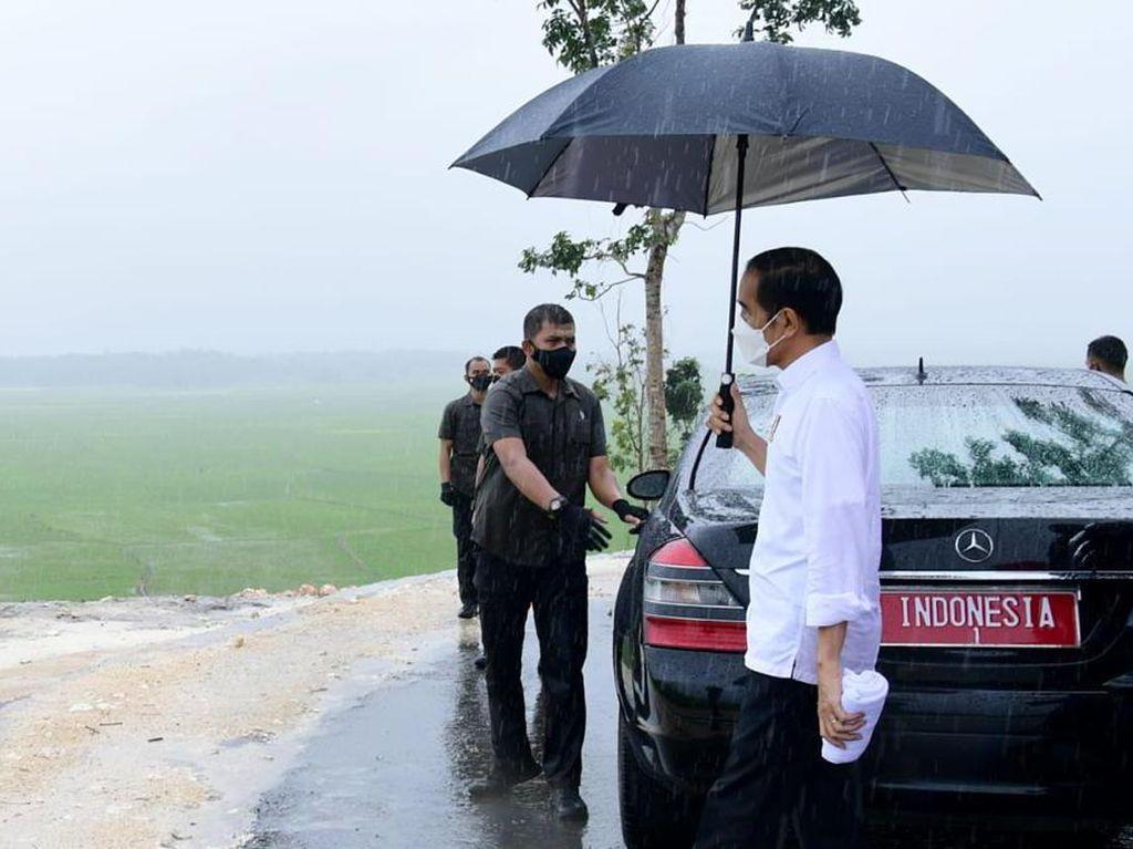 Momen Jokowi Hujan-hujan Pakai Payung Tinjau Food Estate di NTT