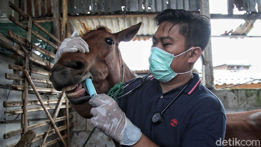 Berbagi Rasa Peduli untuk Kuda Delman di Jakarta Utara