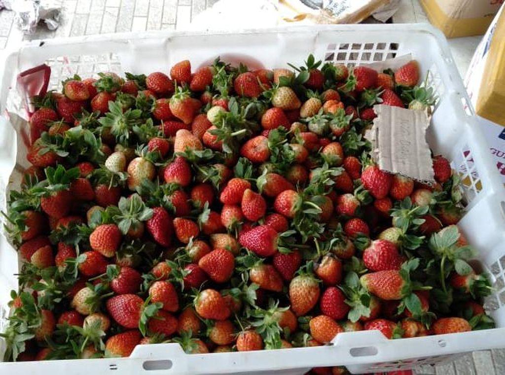 Jadi Tempat Syuting FTV, Ini Kebun Strawberry Tersembunyi di Bandung