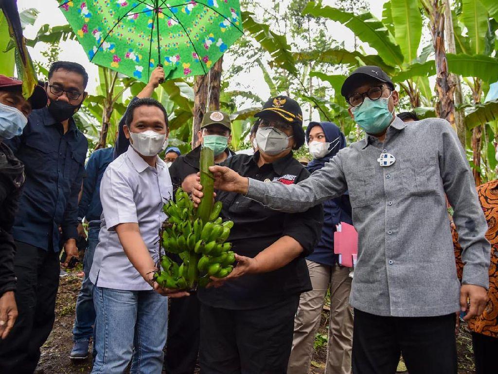 Kabupaten Lumajang Jadi Pilot Project Pengembangan Hutan Sosial