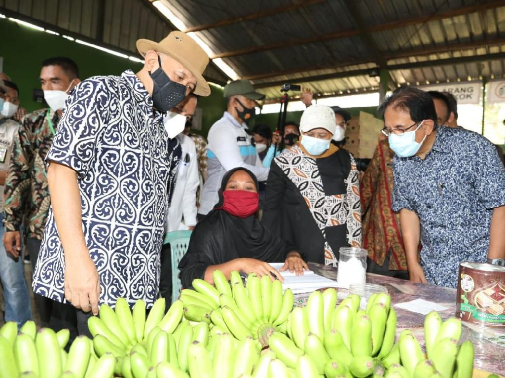 Ekspor Pisang 64 Ton/Bulan, Koperasi di Lampung Dipuji Menkop UKM