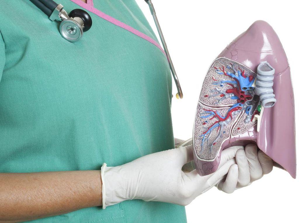 Organ-Organ dan Cara Kerja Sistem Pernapasan Manusia