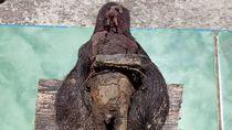 Begini Penampakan Utuh Jenglot Ditemukan di Makam Keramat Kudus