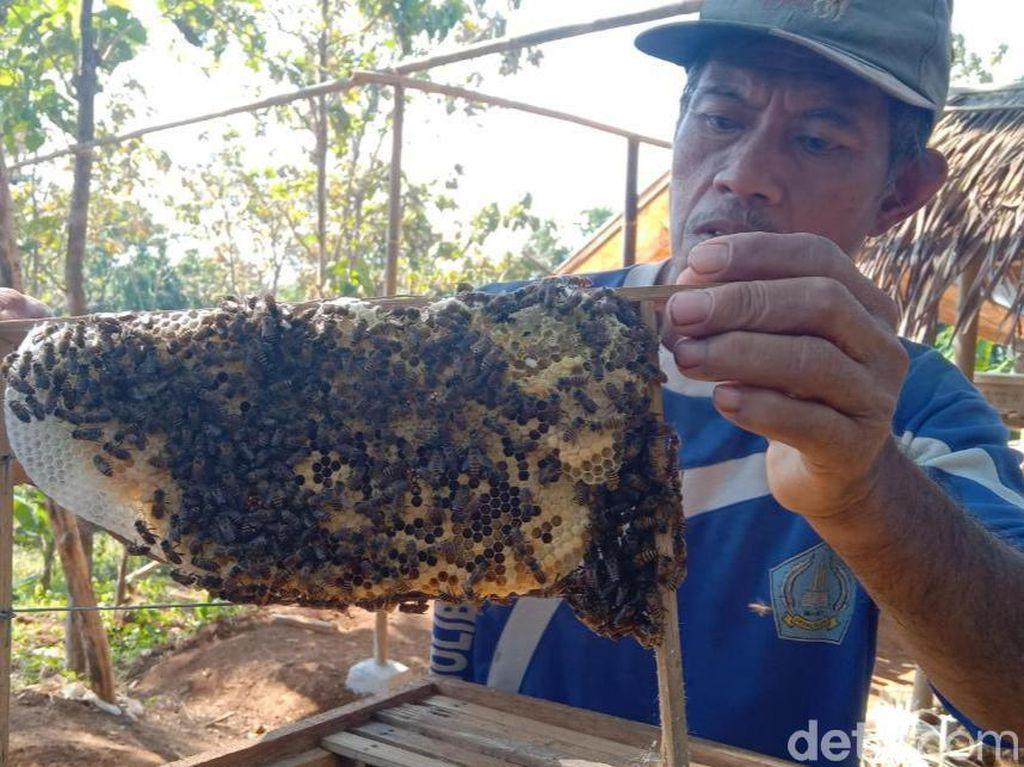 Petani Cirebon Sulap Lahan Kritis Jadi Tempat Budi Daya Lebah Madu