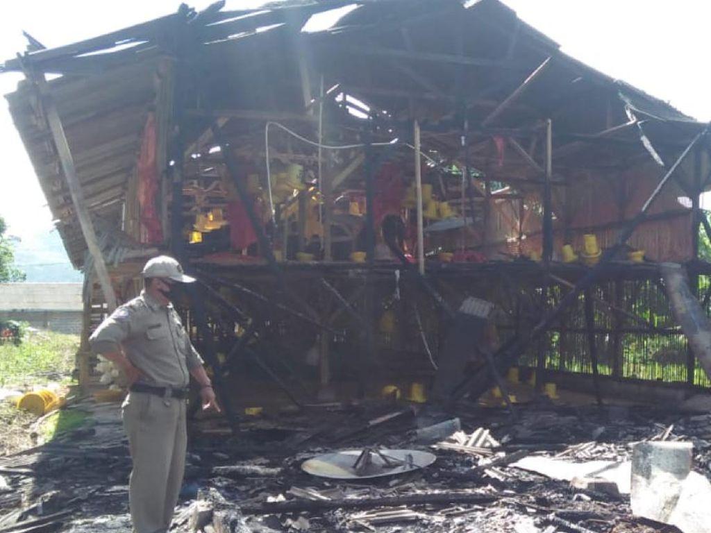 Kandang Peternak Terbakar di Sukabumi, 600 Ayam Mati Terpanggang