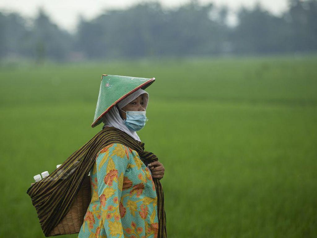 Cerita Perjuangan Perempuan Dusun Kiringan Jaga Warisan Jamu Leluhur