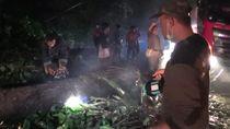 Hujan Deras, Pohon Pinus Tumbang Halangi Jalan Penghubung Bandung-Cirebon