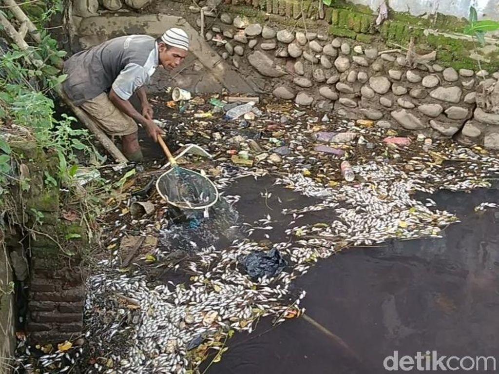 Ribuan Ikan di Sungai Sengkarang Pekalongan Mendadak Mati, Ada Apa?